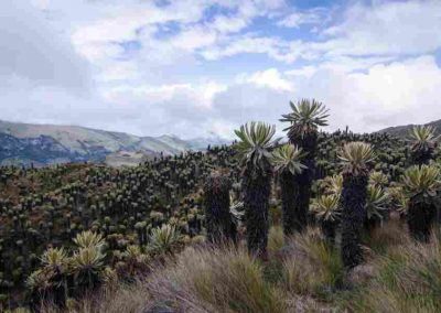 Escalera al Cielo es un exótico recorrido de senderismo (4.3 km) y fotografía en el PNN Los Nevados, apreciando los ecosistema de paramos y humedales
